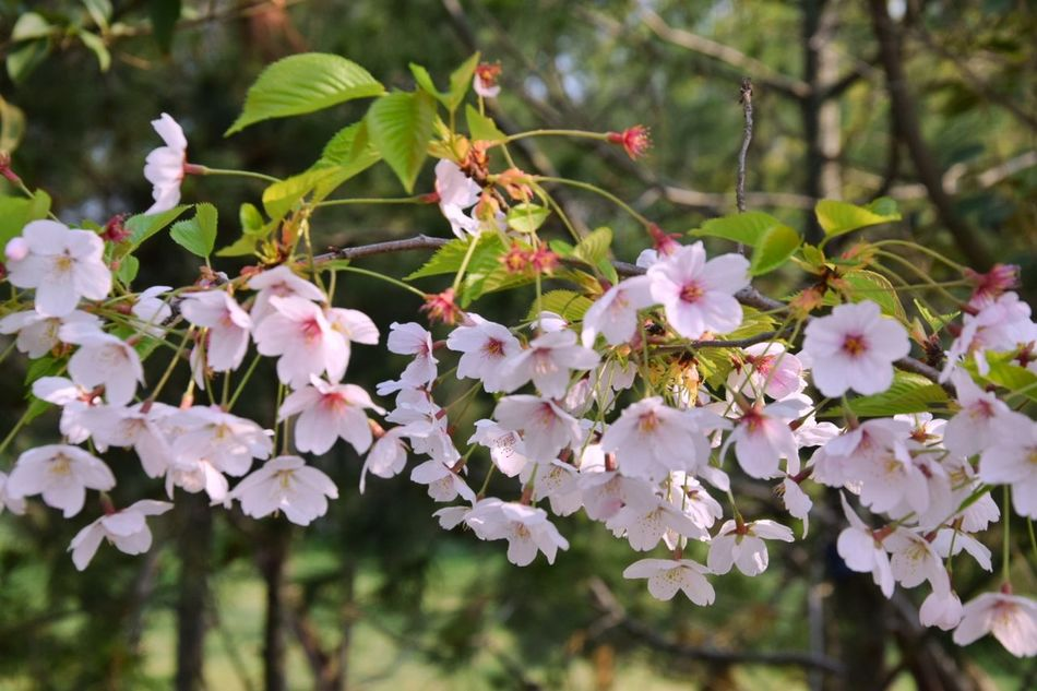 Flower Pink Color Nature Tree Blossom Springtime Plant No People Growth Branch Day Outdoors Close-up Beauty In Nature Fragility Flower Head Freshness