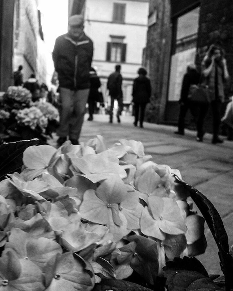 ✴♡📷Biancoenero Blackandwhite Bw Bnw Monochrome Italia Italy Picoftheday Blackandwhitephotography Photo Bianconero Bianco Nero Igersitalia Instagood Photooftheday Streetphotography Street Pisa Toscana Tuscany Igerspisa Igerstoscana
