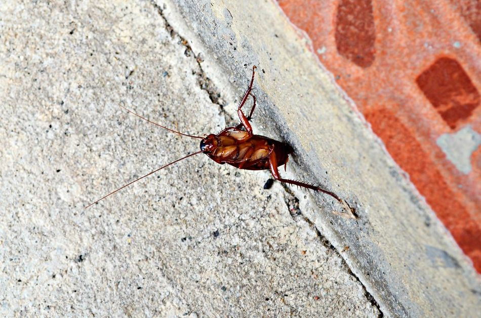 Beautiful stock photos of cockroach, Animal Themes, Animal Wildlife, Animals In The Wild, Built Structure