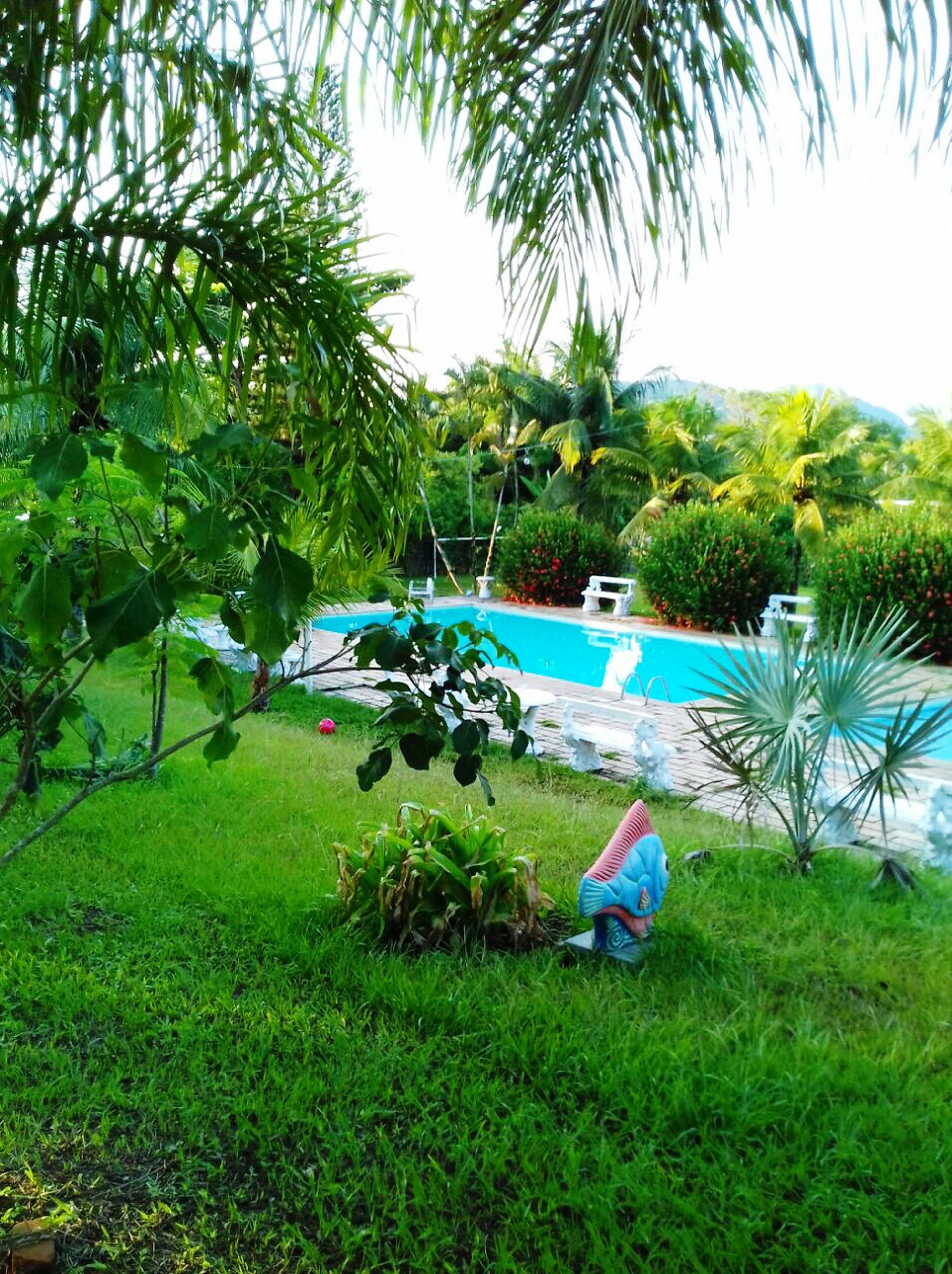 Summer ... Tranquil Scene Day Beauty In Nature Tree Tranquility Nature Water Hello World Green Color Palm Tree Outdoors Growth Environmental Conservation Scenics Grass No People Sky