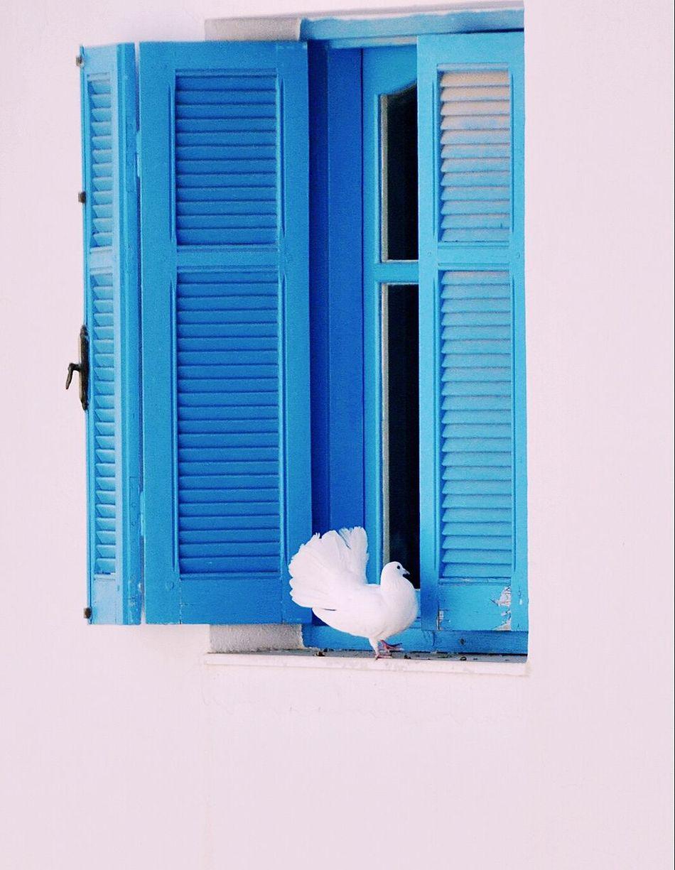 Beautiful stock photos of heaven, Animal Themes, Architecture, Bird, Blue