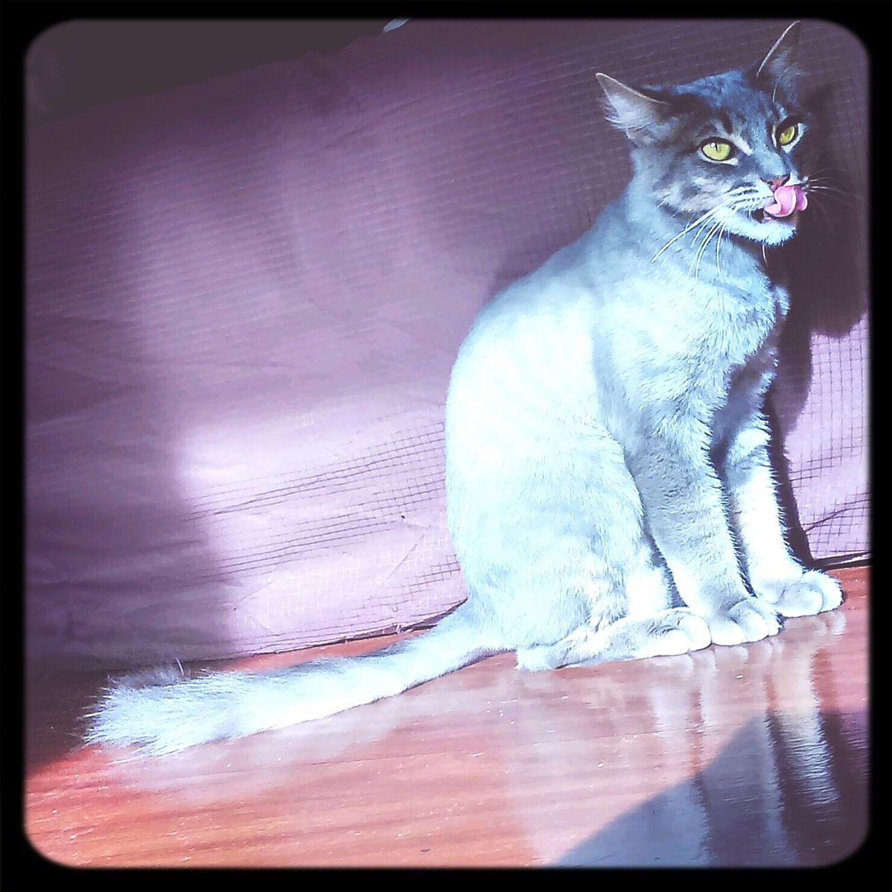 Cat Littlecat  Licklicklick hahahaha Lovely <3