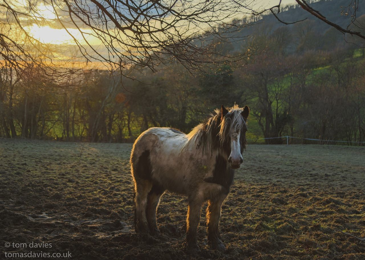 Made a friend on my walk yesterday 🐎😎 Horse Popular Photos Eye4photography  For My Friends That Connect Wales EyeEm Best Shots EyeEm Best Edits Skyporn Sunset Skylovers Relaxing Wales❤ Welshpool Canon