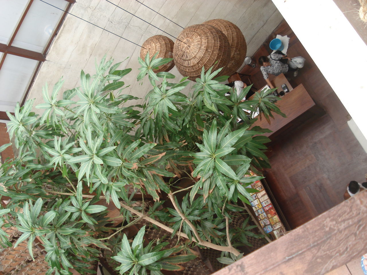plant, high angle view, potted plant, growth, no people, leaf, day, nature, indoors