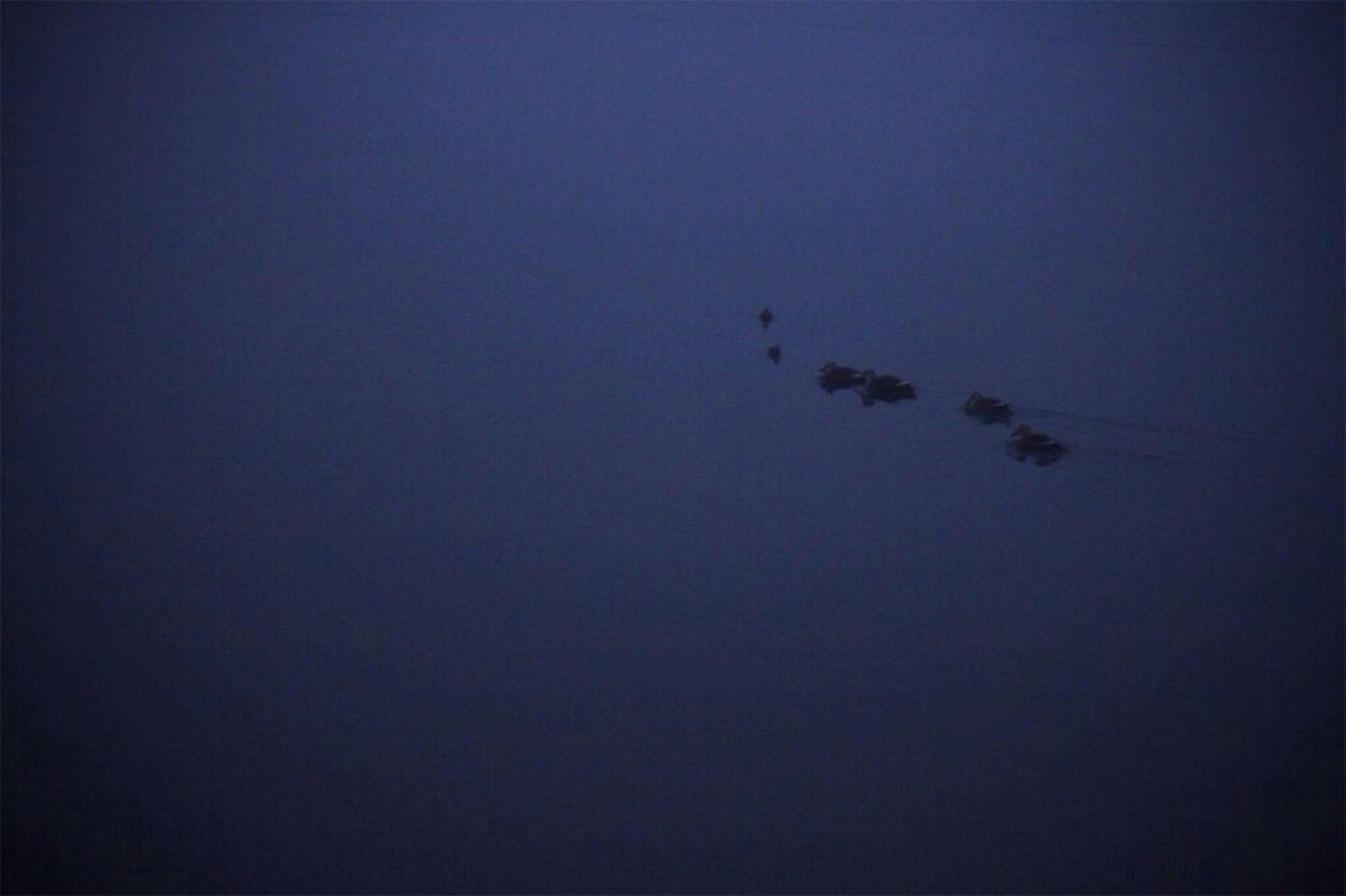 새벽 두물머리의 오리떼