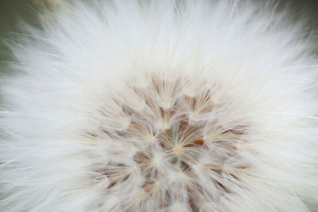 White Color Softness Dandelion Seed Beauty In Nature Close-up No People Freshness Day Canon70d