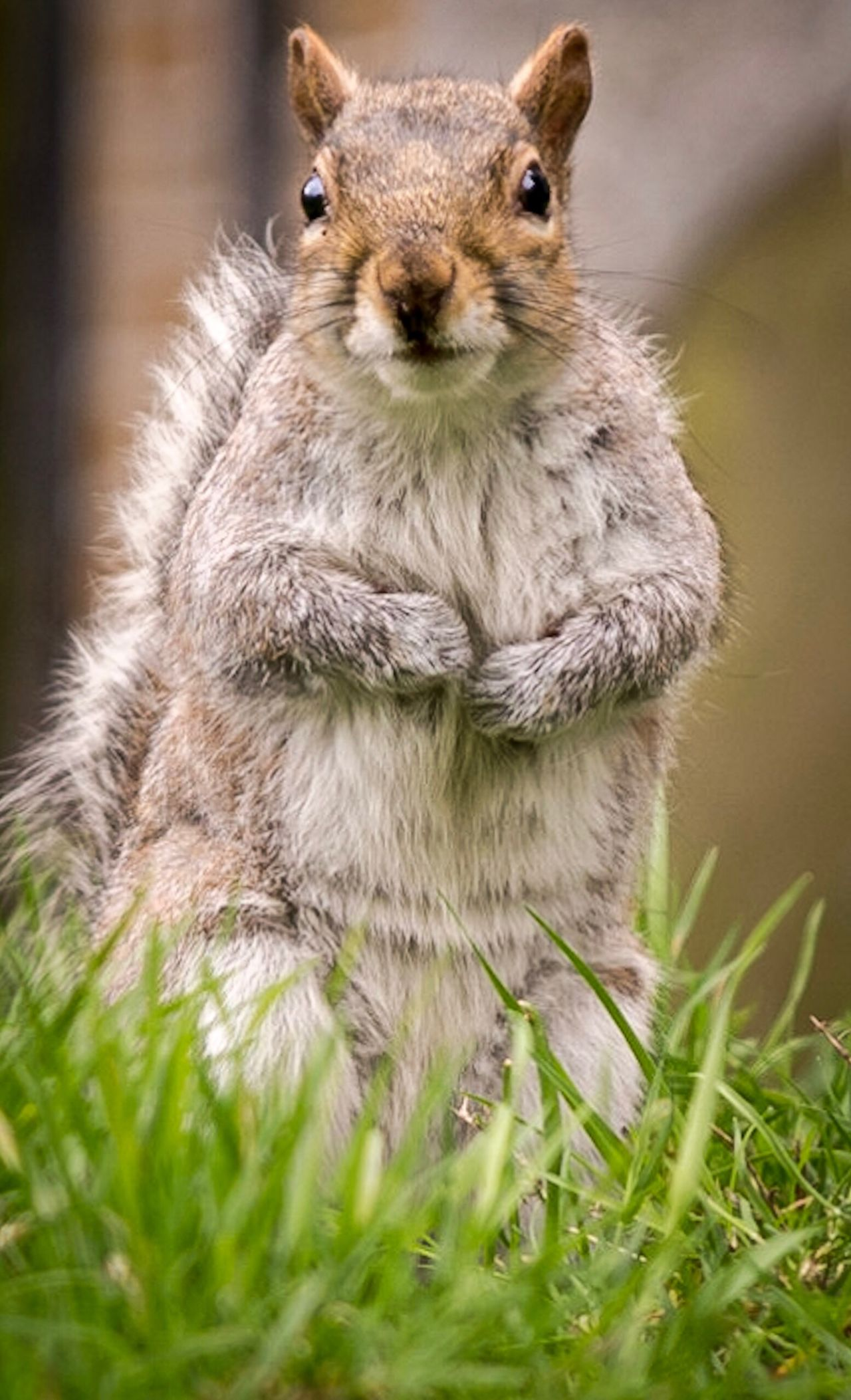 Cutie One Animal Nature No People Mammal Animal Wildlife Close-up Outdoors Animal Themes Day Grass Squirrels Squirrel Grass Beauty In Nature Nature