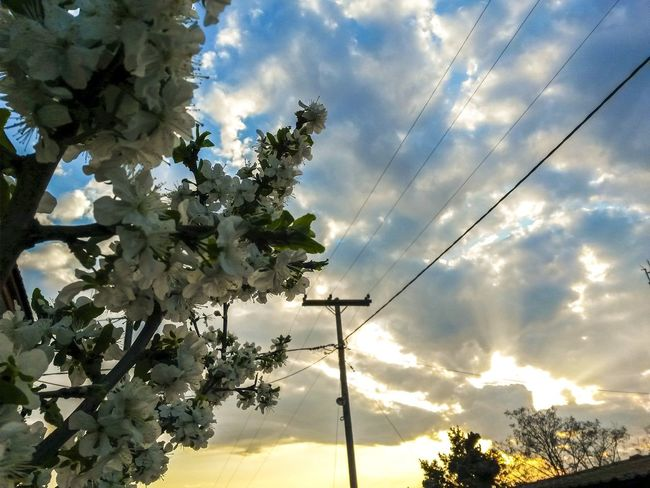 Tree Sky Cloud - Sky Growth Low Angle View Nature No People Outdoors Beauty In Nature Day Tree Springtime Flower Mothernature Nature Photography Natureporn Sunrise Landspace Sunset