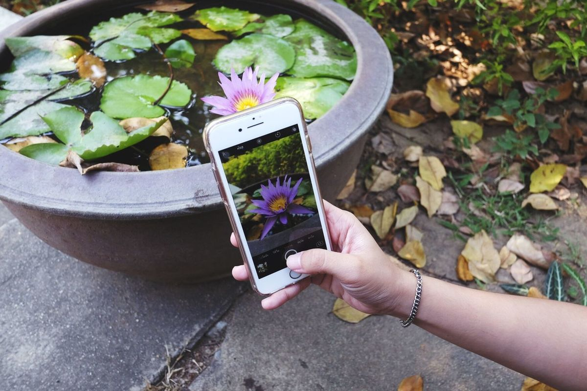 Mobile Conversations water lily Flowers Beauty #flower #spring #happiness Nature Outdoors Day Freshness Growth
