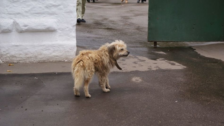 Собака Александров