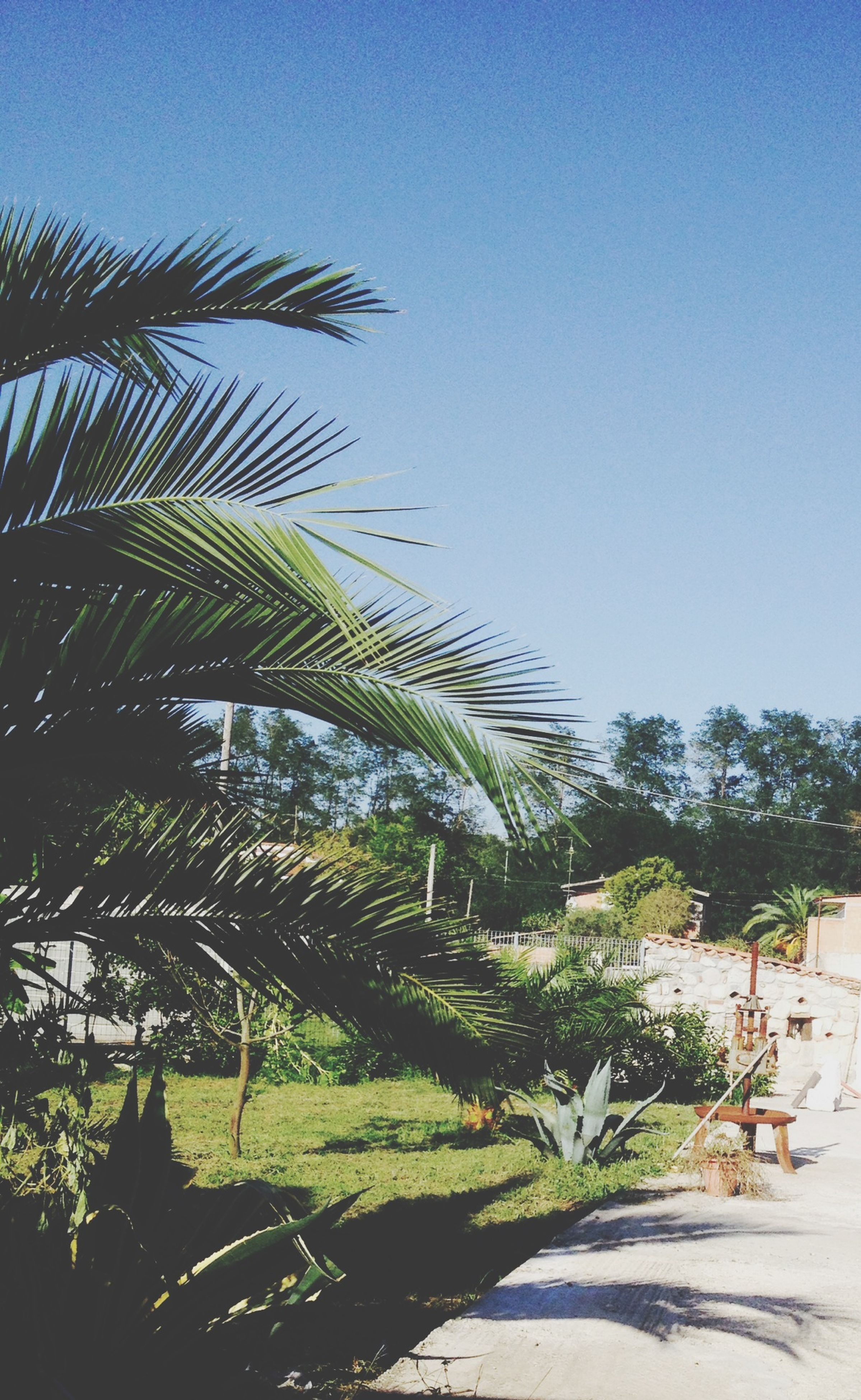 palm tree, clear sky, tree, growth, built structure, building exterior, architecture, green color, plant, nature, sunlight, low angle view, blue, day, outdoors, copy space, tranquility, growing, sky, no people