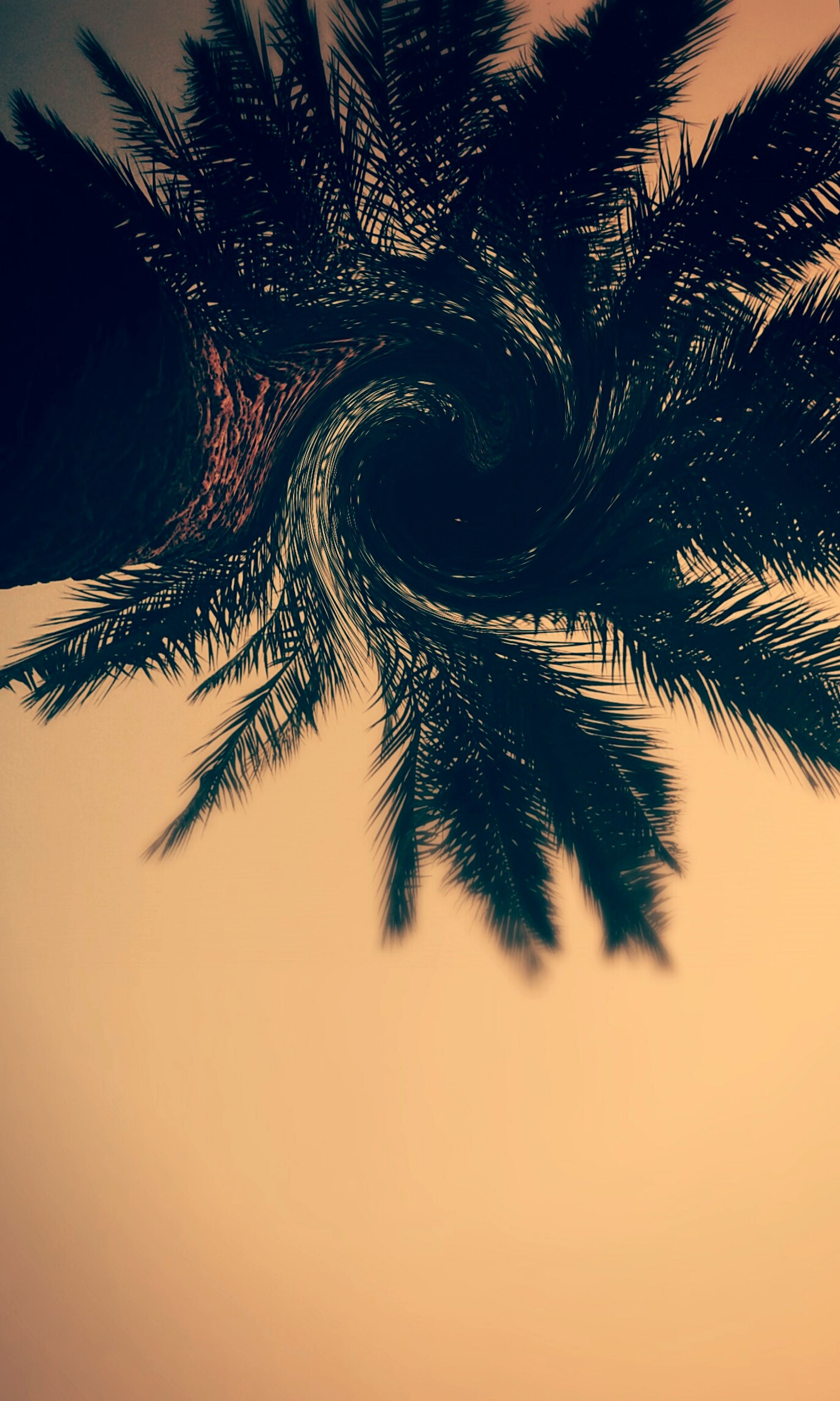 palm tree, low angle view, tree, silhouette, tranquility, nature, sky, beauty in nature, growth, sunset, tranquil scene, palm leaf, scenics, outdoors, no people, clear sky, branch, dusk, tree trunk, idyllic