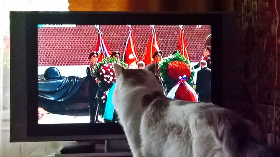 First Eyeem Photo Parade Red Sguare Red Square 9may День Победы💥 Moscow City News On TV Russia Cats Of EyeEm Cats 🐱 Cat Lovers