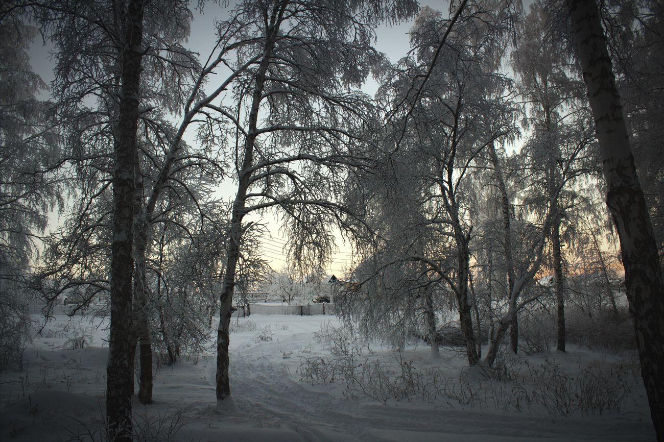 Beautiful Russia First Eyeem Photo Russian Winter Russian Nature Ural Bashkortostan Uchaly Winter Forest