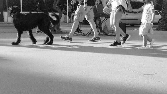 On The Way Walking Walking Around Streetphotography Streetphoto_bw Streetphoto Blackandwhite Black&white Blackandwhite Photography Black And White Photography Black And White Black & White Blancoynegro Dog Family City Sitges