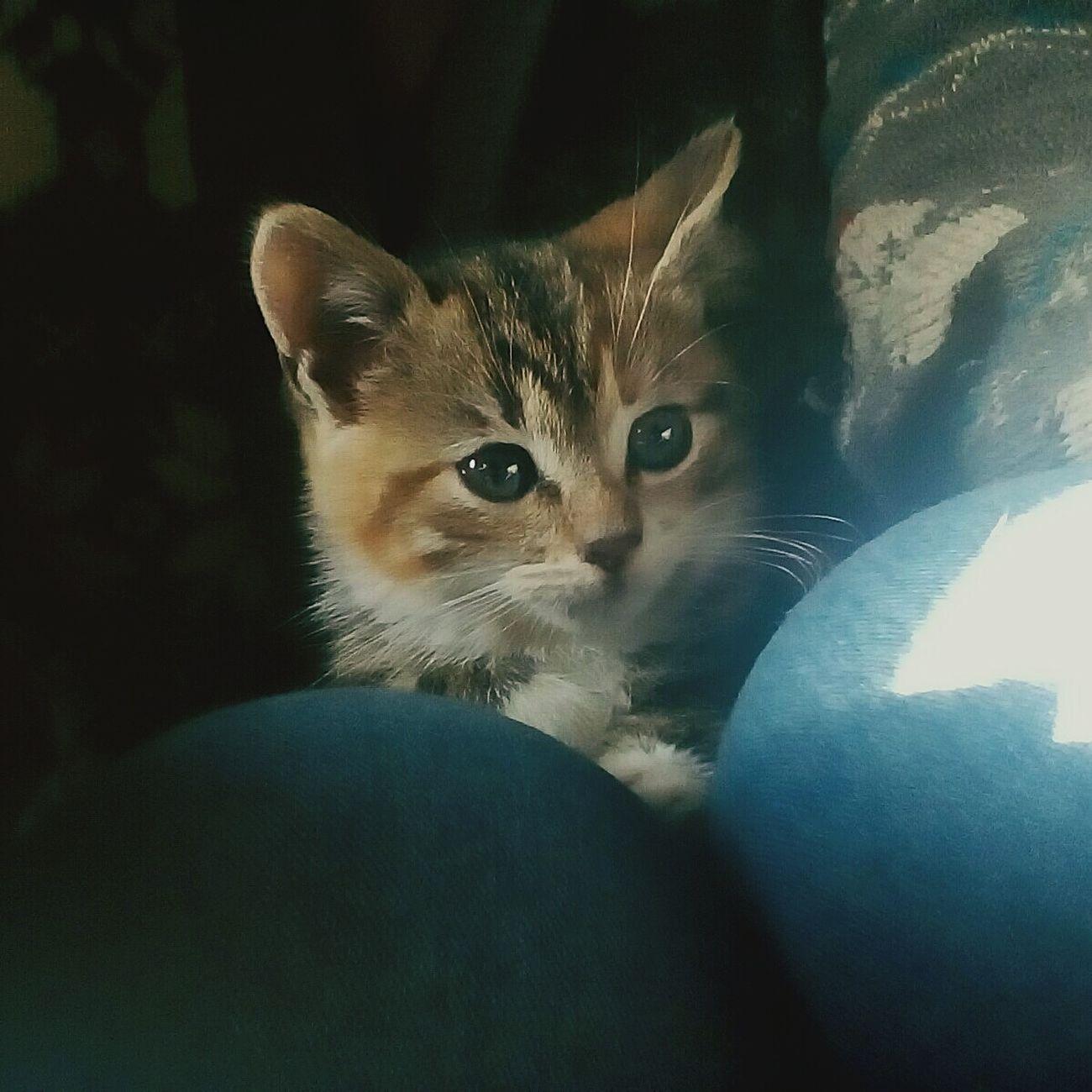 Cat♡ Green Eyes Nora Miauuu 😺 MyLove❤