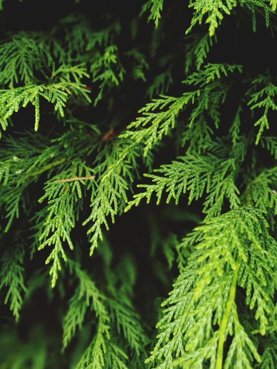 Work. Tree Nature Coniferous Tree Needle - Plant Part Close-up Beauty In Nature EyeEmNewHere The Great Outdoors - 2017 EyeEm Awards