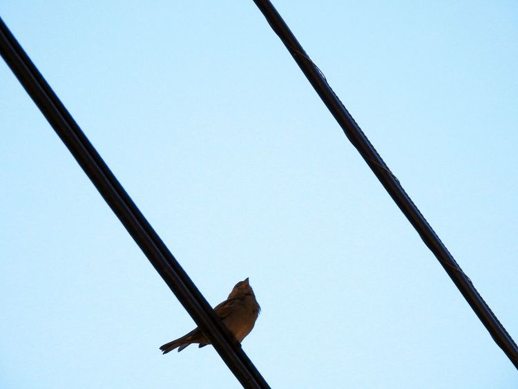 And then there was one...bird on wire. Bird Photography Bird On A Wire Diagonal Lines Birds_collection Birds On Wire Blue Sky From Below Low Angle View Birdwatching Nature_collection Nature Photography Wires In The Sky Wires And Sky Wires Bird Perched
