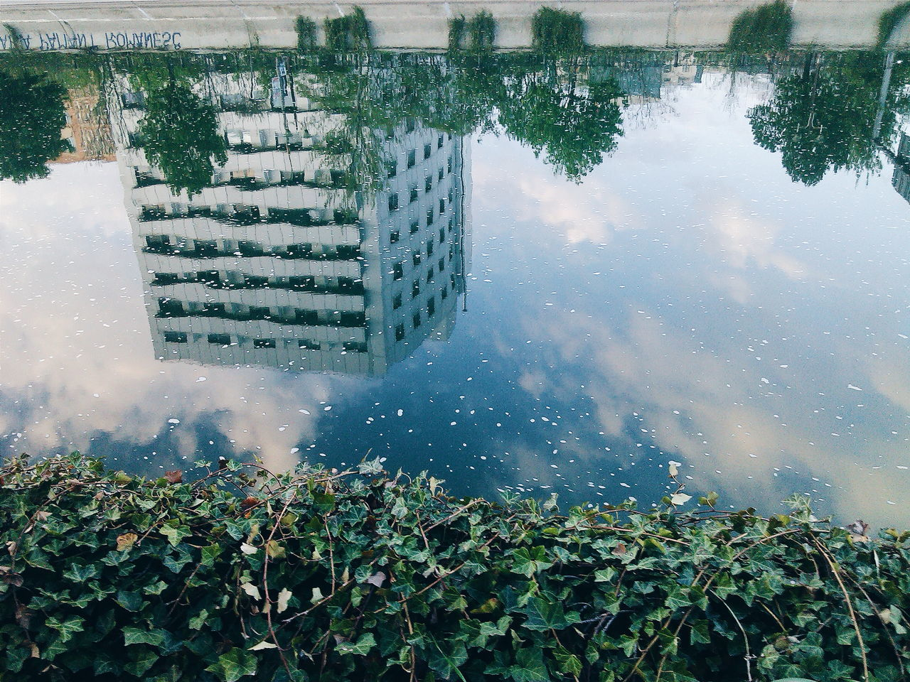 water, outdoors, day, tree, nature, plant, no people, building exterior, growth, architecture, built structure, leaf, lake, beauty in nature, puddle, city