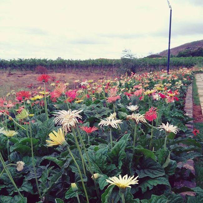 Charmes Nasik Throwback Takemeback Prettylittlethings Flowers SulaVineyards Sula PrettyPretty