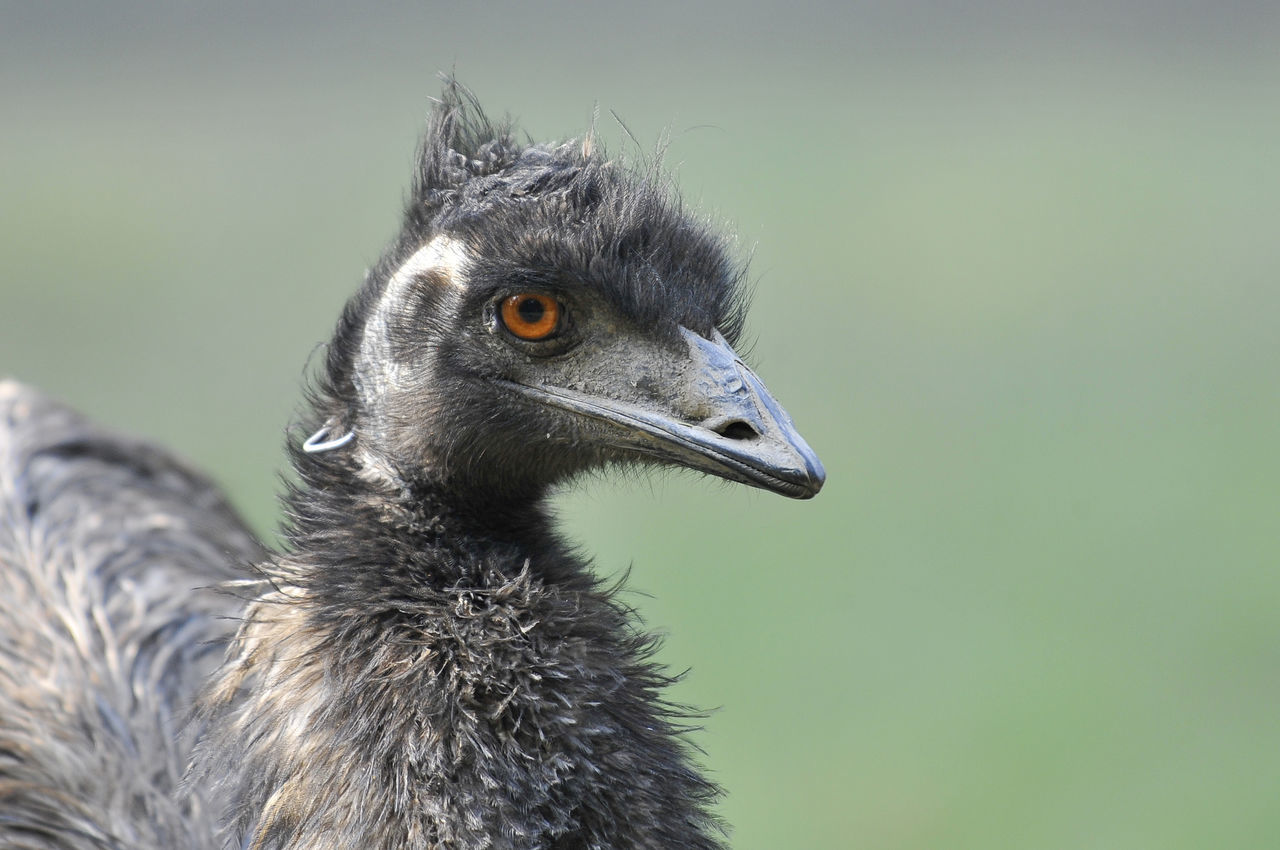 Close-Up Of A Young Bird