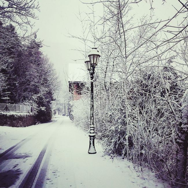 Narnia?? =O Snow Naige Christmas France First Time I See Snow