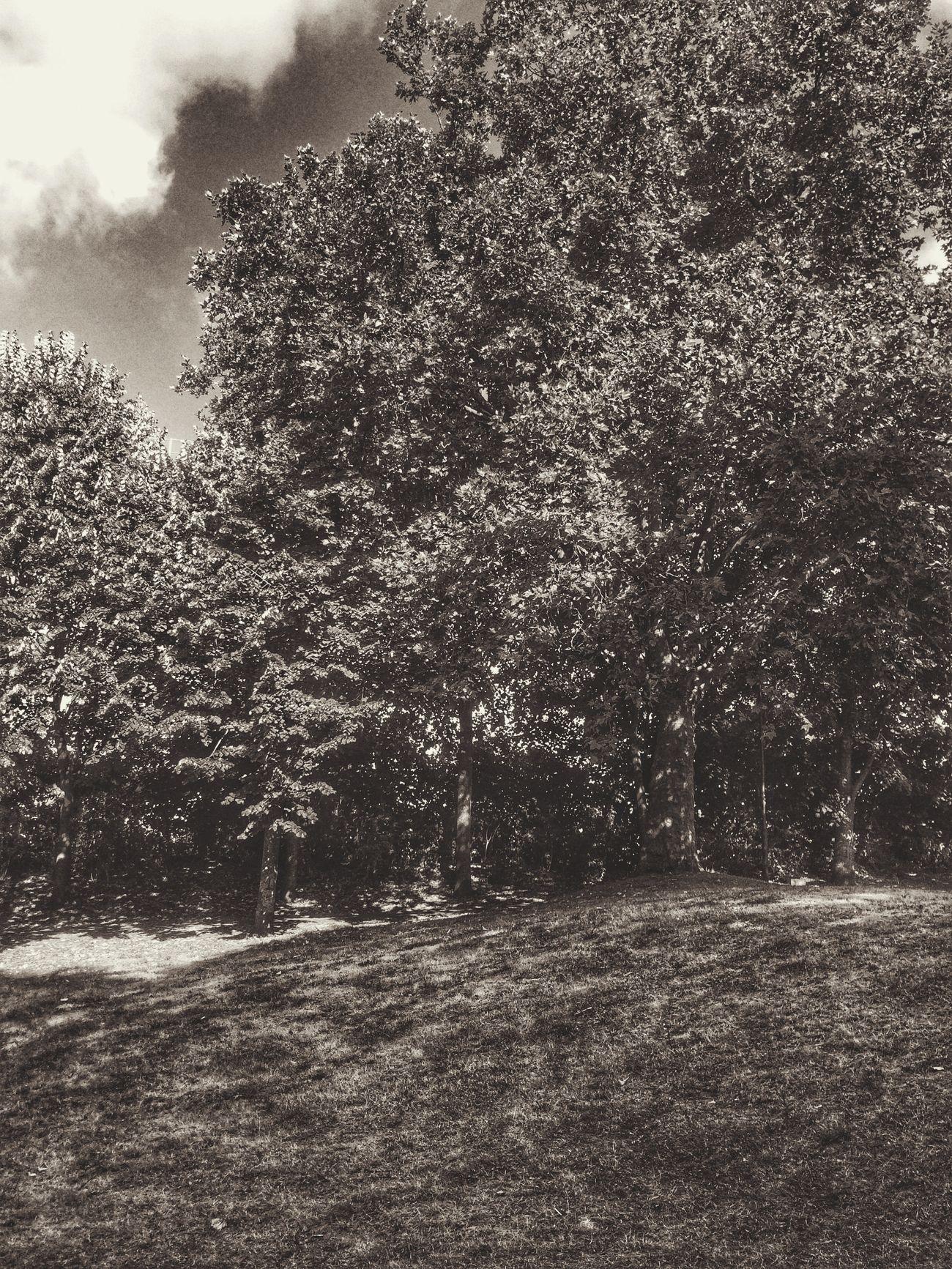 Coulée Verte Tree