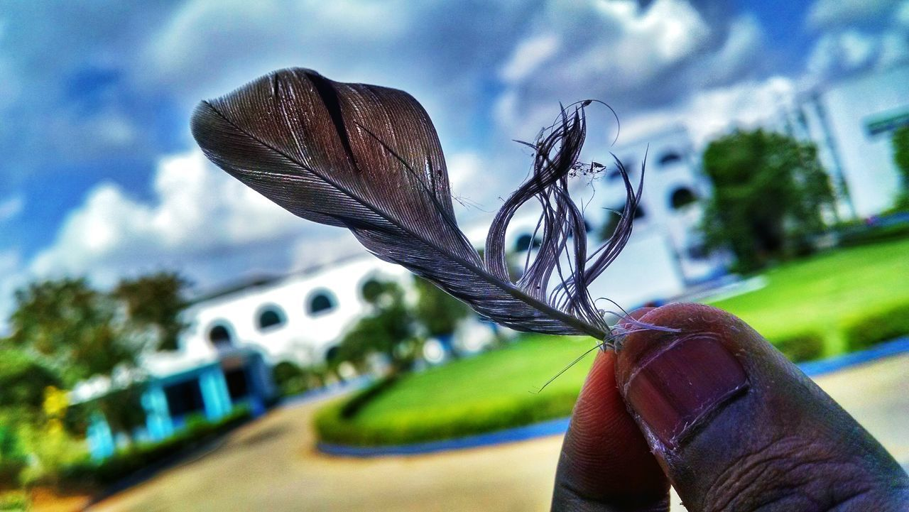 Abandoned part of a life Feather  Eye4photography  EyeEm Nature Lover EyeEm Best Shots Mobilephotography Taking Photos Moto X