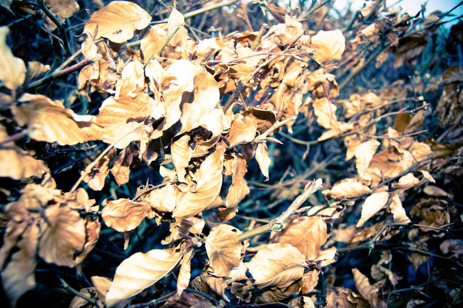 Autumn Backgrounds Beauty In Nature Change Close-up Day Fragility Full Frame Leaf Leaves Mountain Nature No People Outdoors Pen-y-ghent Three Peaks Tree Yorkshire Dales Yorkshire Three Peaks