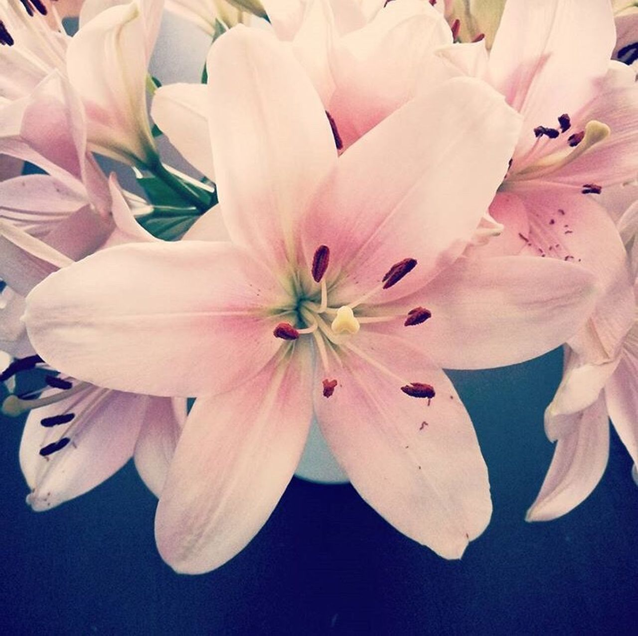 Flower Lilies Fragility Petal Beauty In Nature Flower Head Freshness Close-up Growth No People Blossom Pink Color Feminity Flora