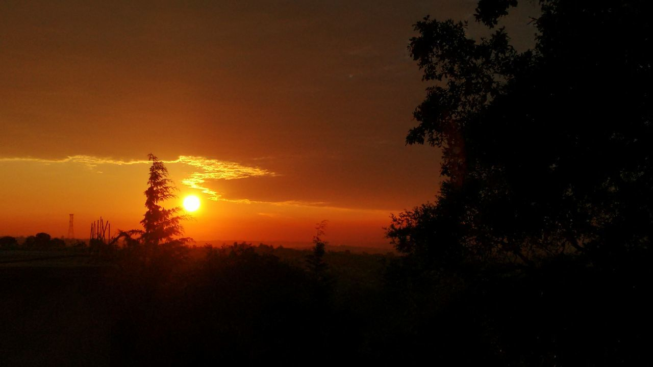 sunset, tree, silhouette, orange color, sky, nature, beauty in nature, sun, tranquil scene, tranquility, no people, scenics, growth, outdoors, landscape