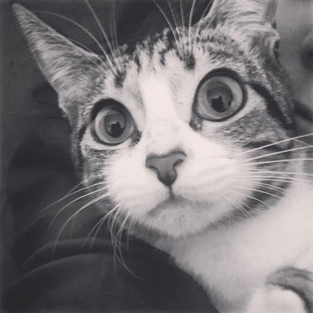 Bom Dia!! Agora sim acabou o meu soninho,se minha mãe deixasse eu dormia até não querer mais 🙀😁 Catsoninstagram Lovecats Amogatos Catslife Catfoto Soninho Nenêthefatcat Nenêmyfatcat Nenêgorda