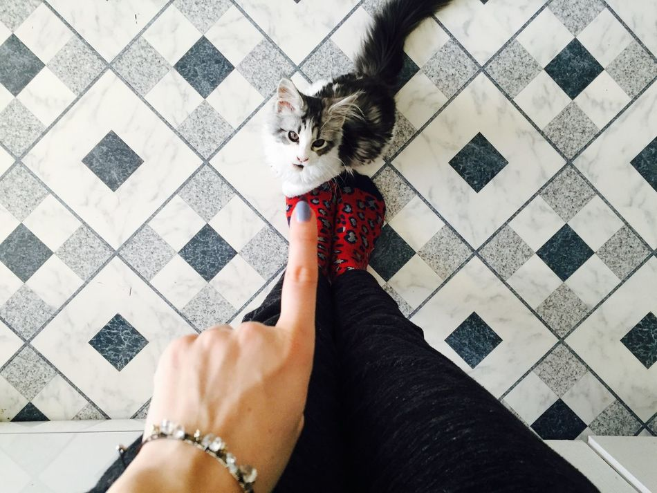 Pointing Finger Education Cat Mainecoon Pets One Animal One Person Domestic Animals Human Leg Leisure Activity Pet Owner Human Hand
