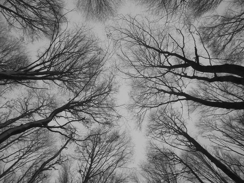 Bare Tree Beauty In Nature Black And White Branch Bükk Bükk National Park Hungary Nature No People Sky Snow Tranquility Tree Winter
