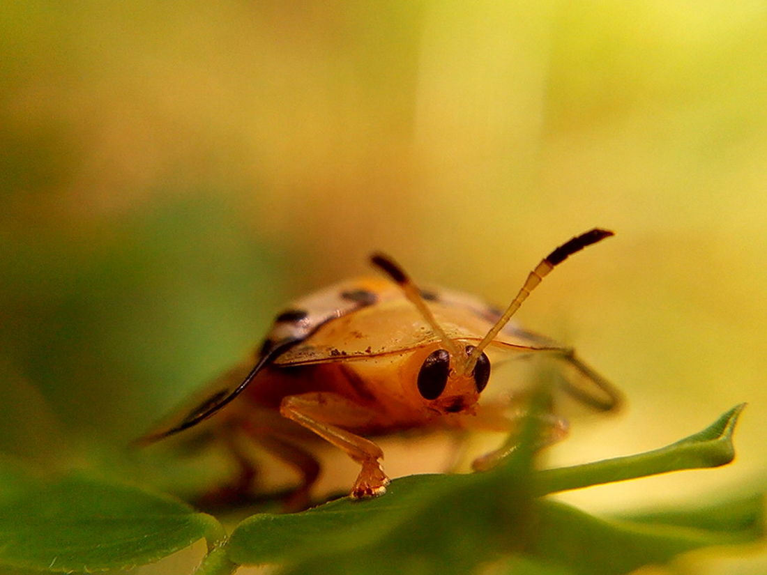 Insect Close-theme Ature Outdoors EyeEm Phillipines Insects Beautiful Nature Insect Macro  Insect Themes