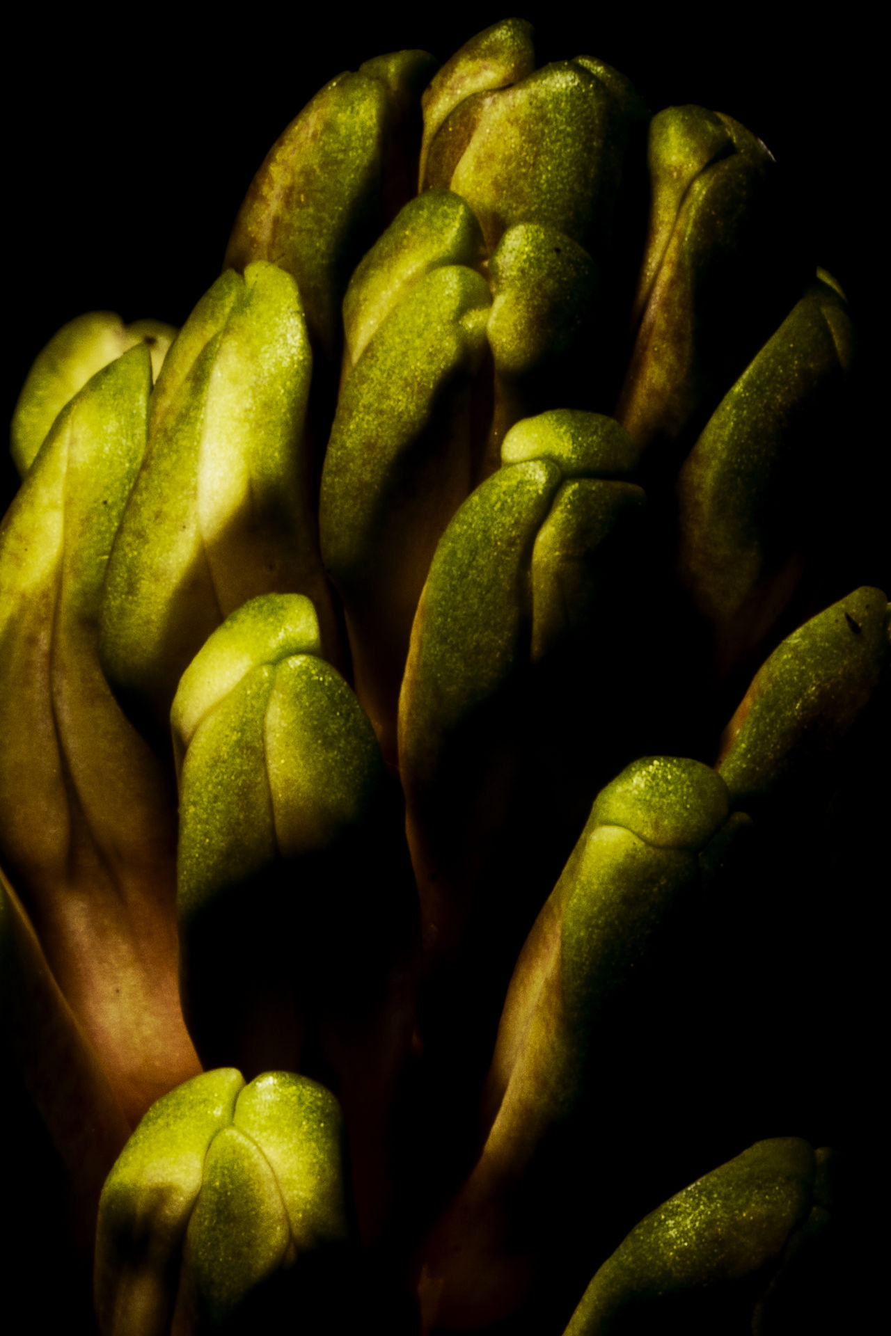 Almost Alien Black Background Details Green Growth Growth Process Macro Macro_collection