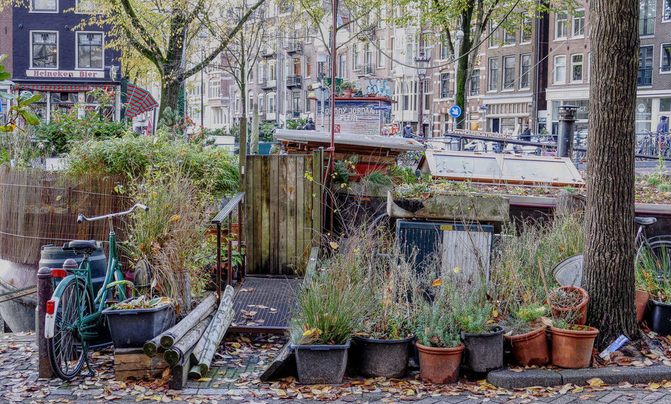 house boat in Amsterdam Affinity Photo Amsterdam Bike Boat Canal City City Life City Street Citygarden Colorful HDR Houseboat Houseboats In Amsterdam Jordaan Outdoors Picturesque Street Photography Streetphotography Tree Way Of Life Adapted To The City