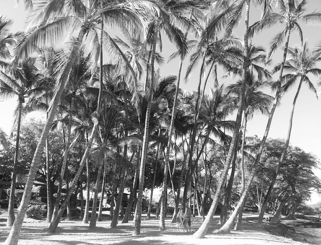 Palmtree jungle Light And Shadow Black And White Monochrome Beach Life