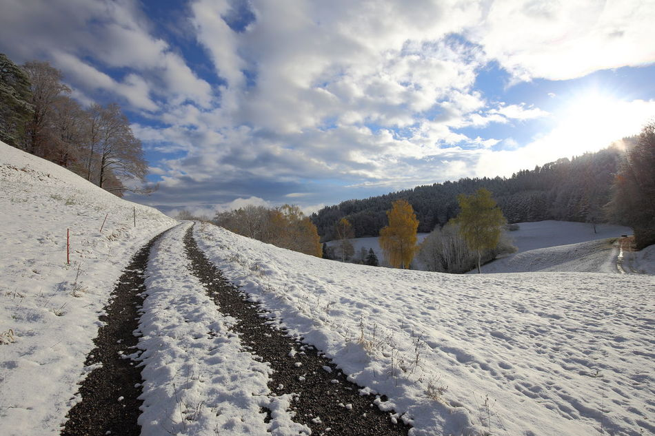 First snow, Switzerland. Autumn Autumn Colors Beauty In Nature Change Of Seasons Cloud - Sky Cold Temperature Eye4photography  EyeEm Best Shots Zürcher Oberland EyeEm Nature Lover First Snow Forest Getting Inspired Heile Welt Idyllic Landscape Nature Rural Road Scenics Snow The Way Forward Tranquil Scene Trees Walking Winter