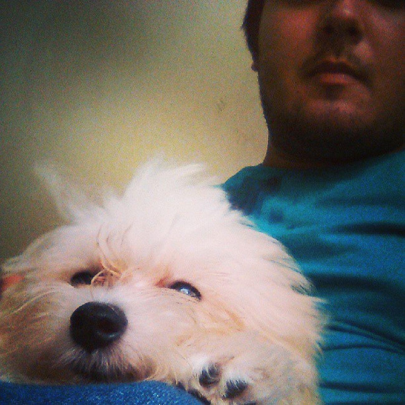 Toda vez que chego em casa sou recebido com muito amor e carinho. Instadodoria Dodoria Pet Pet Photography