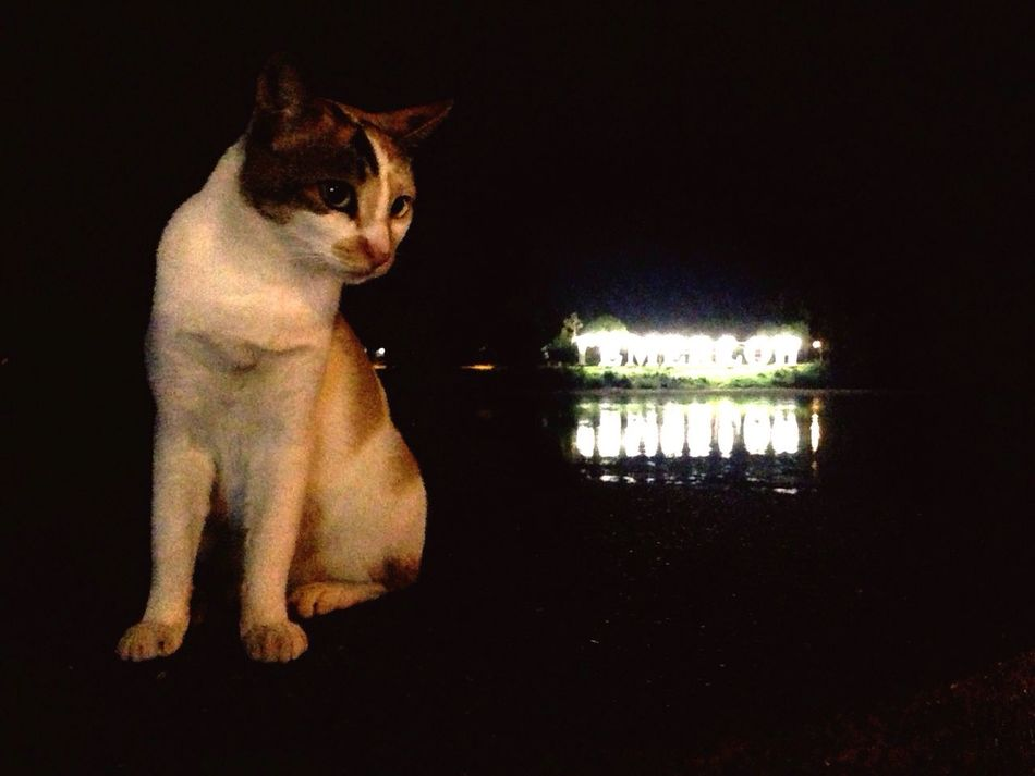 A Cat with the Iconic Landmark of Temerloh . Reflection Pets Domestic Cat Animal Themes Water Outdoors Sign Signboard Pahang Pahangdarulmakmur Pahang, Malaysia Malaysia