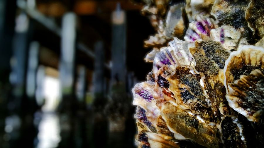 Oysters & Barnacles. PhotographybyTripp Smartphone Photography Phoneography Samsung Galaxy Note 5 Camera360Ultimate Pixlr Oyster Shell Oyster Life Barnacles_stones_seawater :) Barnacles Sea_collection Seaside Up Close And Personal EyeEm Best Shots - Macro / Up Close