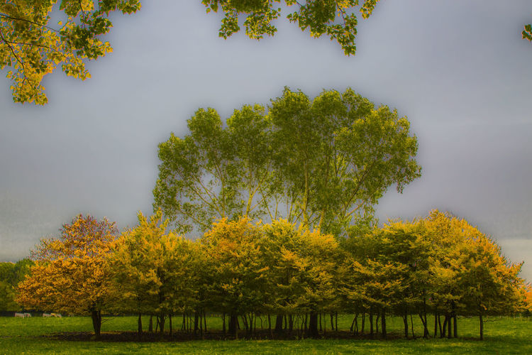 Almere Art Green Color Herfst Landscape Nerherlands Trees Weather