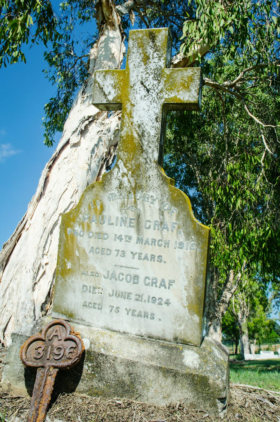Tree Outdoors Day Low Angle View Clear Sky Nikon D5100  Gravemarkers Cemetery Photography Peaceful Graveyard Beauty
