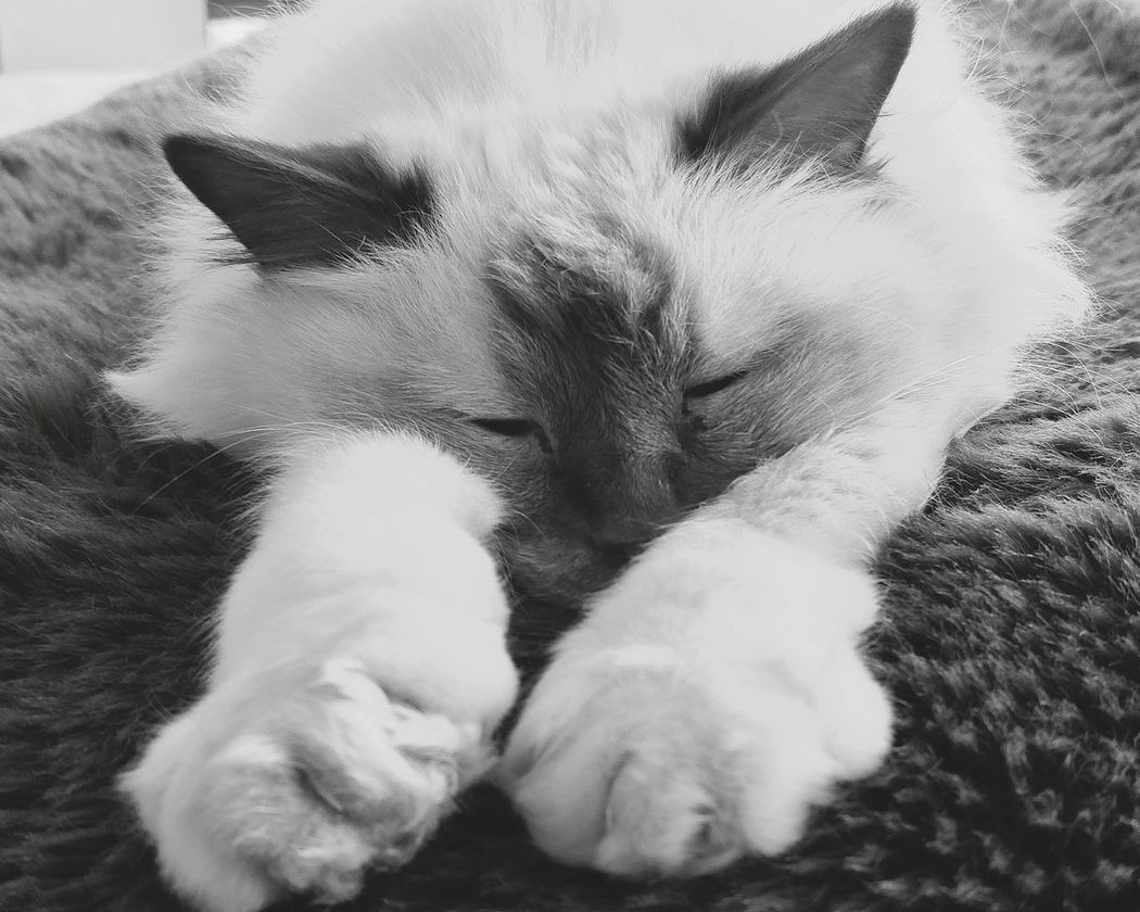 Pets Indoors  Domestic Animals Domestic Cat One Animal Animal Themes Sleeping No People Feline Mammal Close-up Cats Of EyeEm Cats Lovers  Indoors  Sleepy Kitty Best Photos Newest Talent The Week On EyeEm