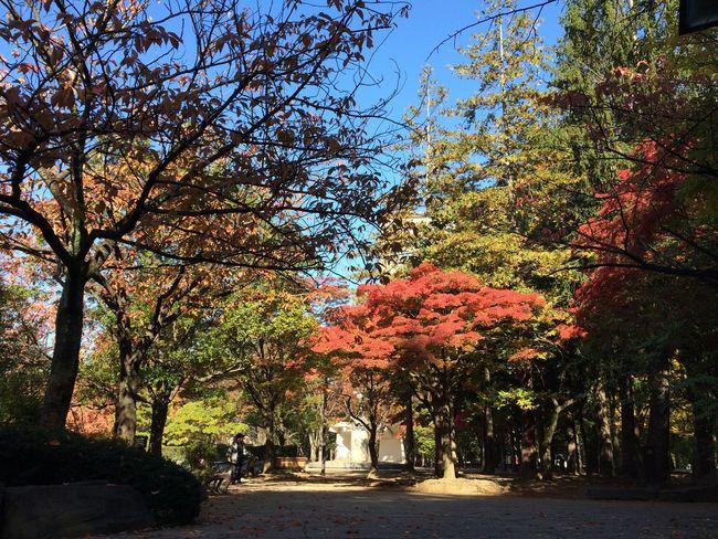 Autumn Autumn Leaves Blue Sky Morning
