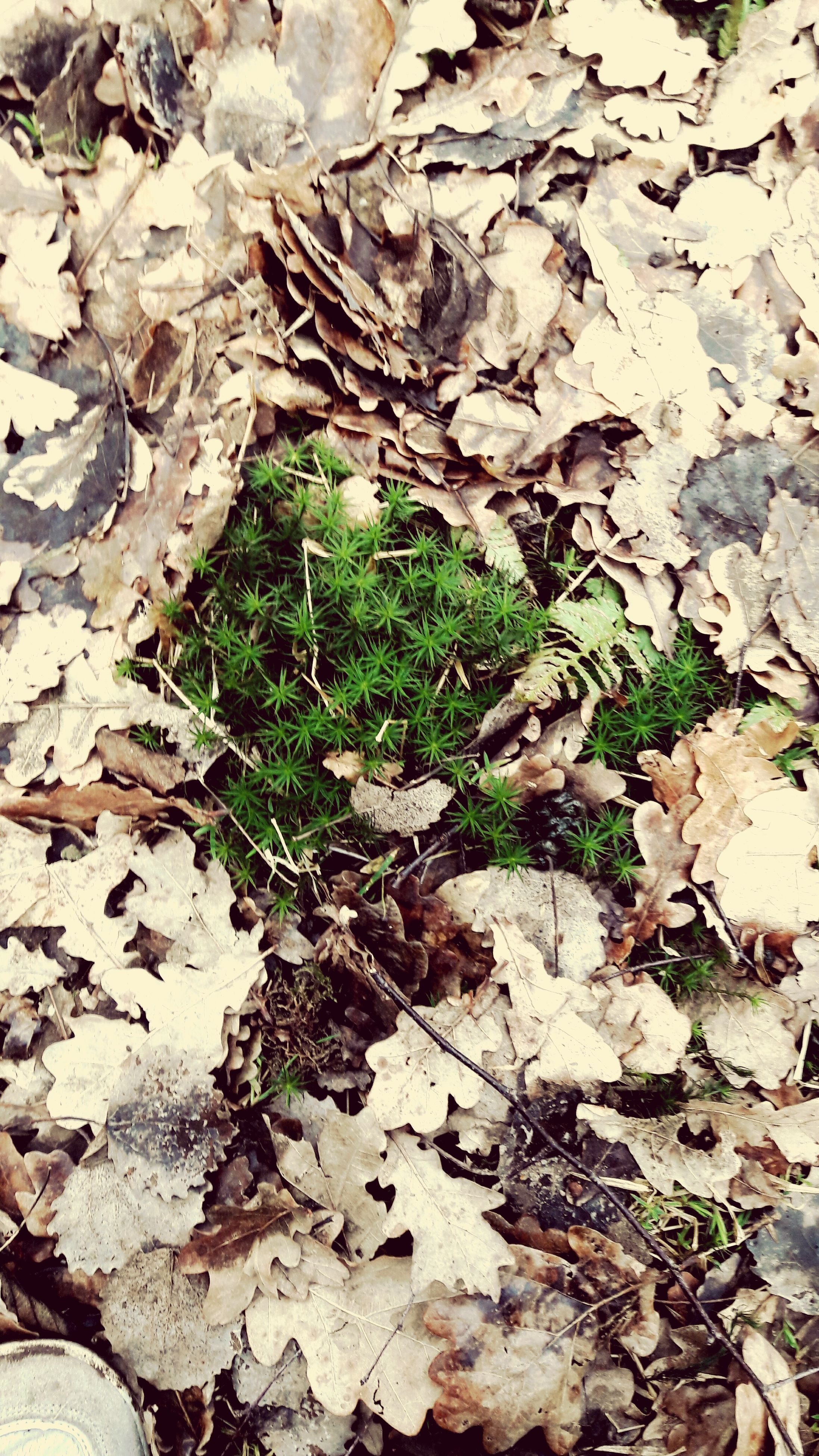 leaf, nature, growth, high angle view, plant, no people, close-up, green color, ivy, outdoors, beauty in nature, day, backgrounds, fragility, tree