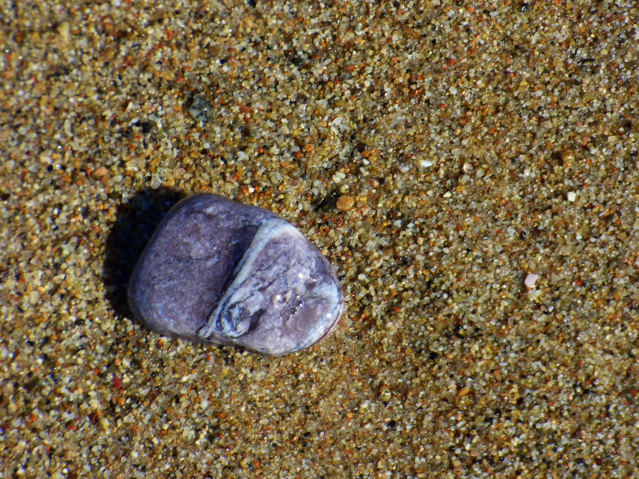 one animal, animal themes, beach, sand, sea life, no people, animals in the wild, nature, close-up, day, animal wildlife, outdoors, sea, beauty in nature, undersea, fragility