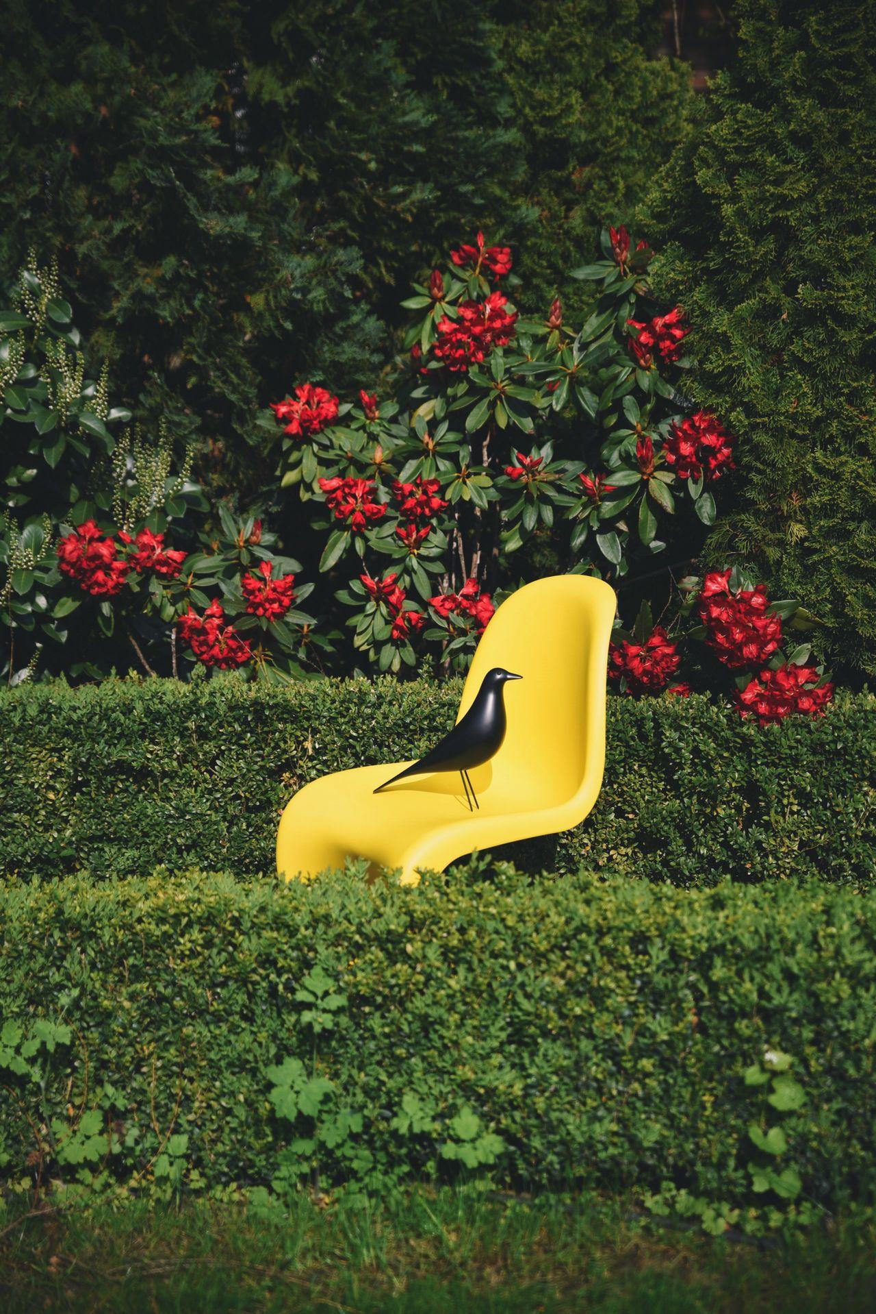Garden Yellow Flowers,Plants & Garden Chair Panton Design Eames Spring