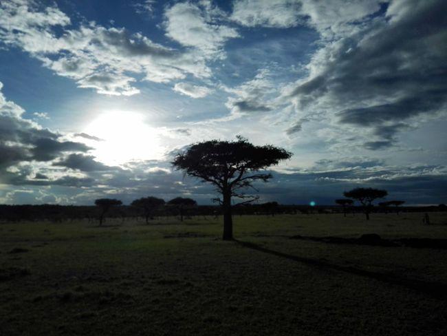 Hello World masai mara First Eyeem Photo